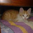子猫・名前はチャッピー